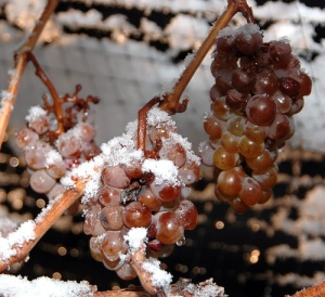Frozen grapes can make sweet wines.  (Image credit:  Dominic Rivard via Flickr)